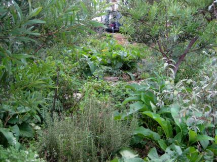 Edible forest garden in Australia