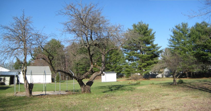 Looking from the W: three apple trees, eastern neighbors' garage & shed, and concrete pad (metal shed frame has been removed)