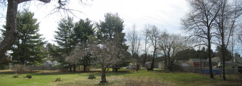 Southernmost apple tree, white pine stand, and SW corner of property, looking from N